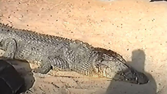 Video of crocodile attack in Australia